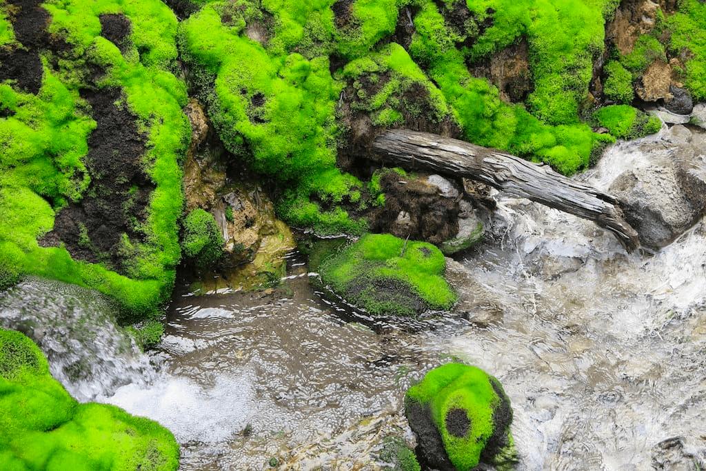 Chatsubomi Moss Park