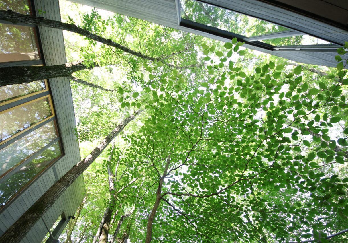 Villa Morinoya Kaikian / 森のや 回輝庵 自然に囲まれた貸切ヴィラ